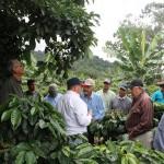 cultivos alternativos